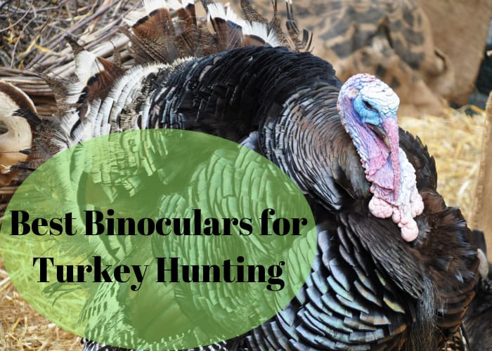 best binoculars for turkey hunting