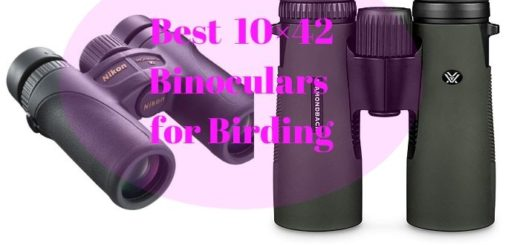 Best 10×42 Binoculars for Birding
